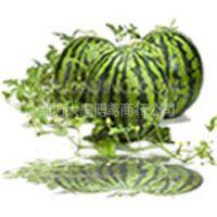 供应用土坑贮藏法贮藏正宗潍县萝卜的过程