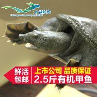野生甲鱼 大湖野生甲鱼2-5斤 野生甲鱼批发