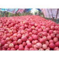 陕西红富士苹果批发,红富士苹果价格,红富士苹果产地,红富士苹果价格行情。
