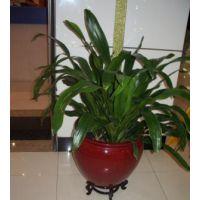 深圳宝安区办公室植物租摆服务有买有送九折更优惠!