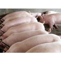 育肥猪自动化降温消毒设备,米孚育肥猪降温消毒设备