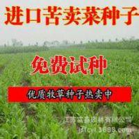 优质牧草种子苦买菜、苦卖菜种子直销、发芽率高、品种优