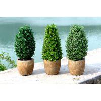 新品促销 zakka 杂货 家居装饰仿真植物盆栽 整体仿真盆景DL135