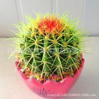 办公室内桌面绿植仙人掌花卉防辐射多肉植物仙人球金冠 量大优惠