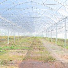 供应山东德州豪达瑞科HD型高档花卉种植、花卉市场用玻璃连栋温室规划及建设