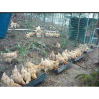 养殖隔离绿色网+安阳养殖隔离绿色网+养殖隔离绿色网价格
