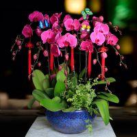 武汉室内植物送货上门,武汉办公室内绿植花卉盆栽