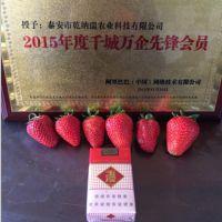 江津妙香草莓苗_乾纳瑞农业科技(图)_妙香草莓苗报价