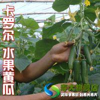 【卡罗尔水果黄瓜种子】水果黄瓜种子蔬菜籽庭院种植约90粒袋装