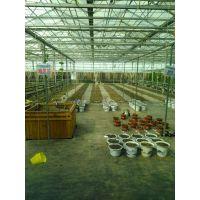山东豪达瑞科专业建设用于高档花卉种植的玻璃连栋温室建设