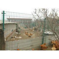 现货供应养殖护栏网,养鸡护栏网围网