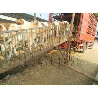 鞍山哪里卖小牛犊≈3≈[在生产性能上,据屠宰测]