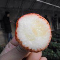 白草莓苗基地|乾纳瑞农业科技(图)|吉林白草莓苗基地