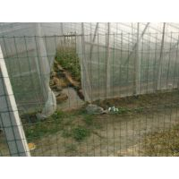 供应3米长花架钢丝围网【图】花圃外围防盗围网防止攀爬防护栏花卉排放隔离网