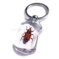 高档琥珀饰品 厂家热销裤子型 透明昆虫标本 工艺琥珀钥匙扣