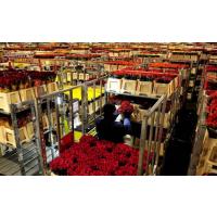 花卉保鲜冷藏库,鲜花保鲜库,鲜花冷藏库安装