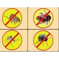 家庭灭蟑螂 天下无虫(图) 家庭灭蟑螂方法