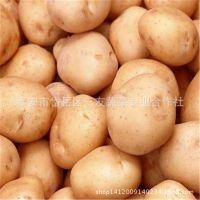 批发销售保鲜蔬菜 新鲜土豆 优质土豆 有机土豆 山东马铃薯
