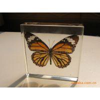 批发昆虫琥珀工艺饰品、摆件  真蝴蝶教学标本