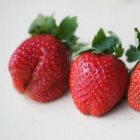 乾纳瑞农业科技(在线咨询)|草莓苗|咖啡草莓苗怎么卖