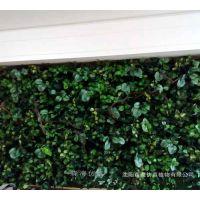 高端仿真绿萝植物墙背景墙绿植墙立体墙假绿植墙商业风格装饰壁挂
