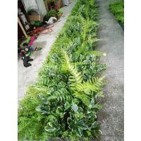 仿真植物墙 广州植物墙厂家 景观绿墙制作团队 墙壁假植物