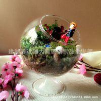 苔藓微景观生态瓶 玻璃瓶子 酒杯花瓶批发