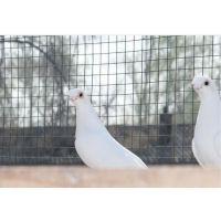 武汉养鸟围栏网实力厂家咸宁兔子喂养户专选围网厂家孝感花园铁丝网围栏