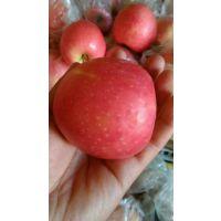 粉红佳人苹果批发粉红佳人苹果基地