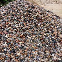 衡水哪有鹅卵石卖的 永顺5-8公分天然鹅卵石批发