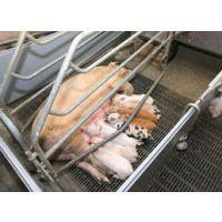 养鸡养兔子护栏网体育场围栏网铁艺围栏养殖围栏网价格养殖网厂家 质量保证 价格优惠1520338607