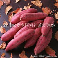 薯类我的***棒,河北雄县专供电烤紫薯 甘薯 红薯