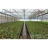 建蔬菜大棚造价多少钱 13920286607