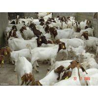 肉羊养殖场设计