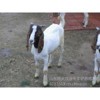 供应供应皓天肉驴养殖场肉驴价格肉驴苗多少钱