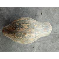 供应香芋南瓜种子