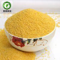 赤峰敖汉小米  批发优质小米  杂粮小米  黄金米 小米黄金苗