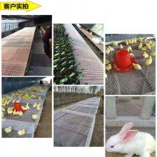 塑料平网 养鸭踩踏网 耐用塑料网