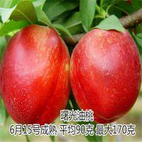 出售夏甜桃苗 优质离核甜桃苗 果实无需套袋