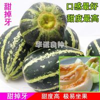 寿光种子 好吃的甜瓜 甜掉牙--甜瓜种子 家庭菜园 阳台盆栽专用