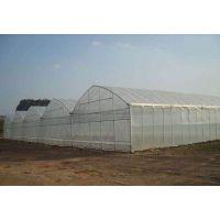 南方蔬菜大棚/水果大棚/种植大棚