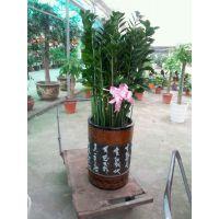 深圳福田竹子林附近有没有做绿植盆栽出租的绿化公司