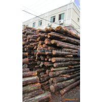 余姚 慈溪哪里有松木卖?供应松木桩 打桩木 长度5-6米
