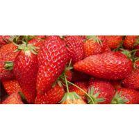 世杰园艺场(图)|章姬草莓苗基地|思茅章姬草莓苗