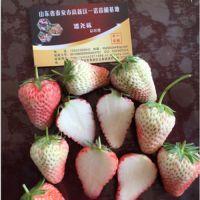 白草莓苗直销_台北白草莓苗_乾纳瑞农业科技