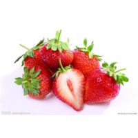 泰安众彩草莓基地 幸运之花草莓苗供应