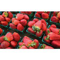 山东红颜草莓苗种苗 红颜草莓苗新品种 红颜草莓苗多少钱一棵
