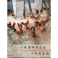 正安县青脚红羽土鸡苗3号鸡苗包运输保质量