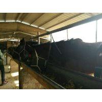 肉驴德州驴山东养驴场山东肉牛养殖出售