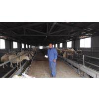养羊场自动降温、消毒、除臭设备